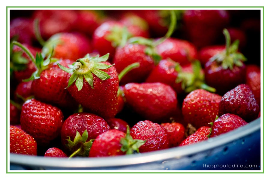 freezing strawberries – {what i'm working on today}