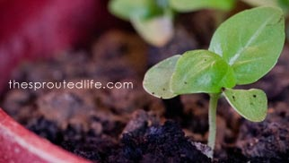 the sprouted life bio picture